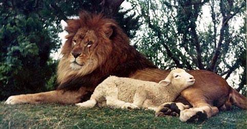 lion shall lie